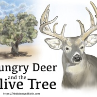 Hungry Deer and the Olive Tree